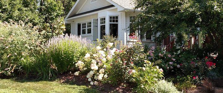 Have med udeplanter